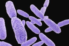 Klebsiella pneumoniae superbakteria