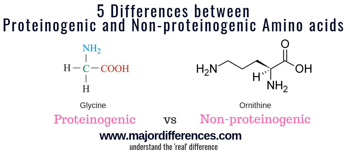 Proteinogenic Amino Acid vs Non-proteinogenic amino acids