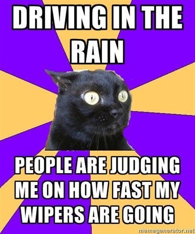 anxiety cat driving in the rain