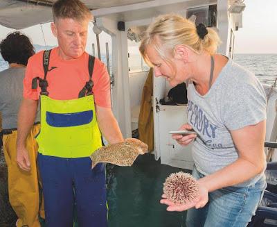 Excursiones de Pescaturismo en Alcúdia