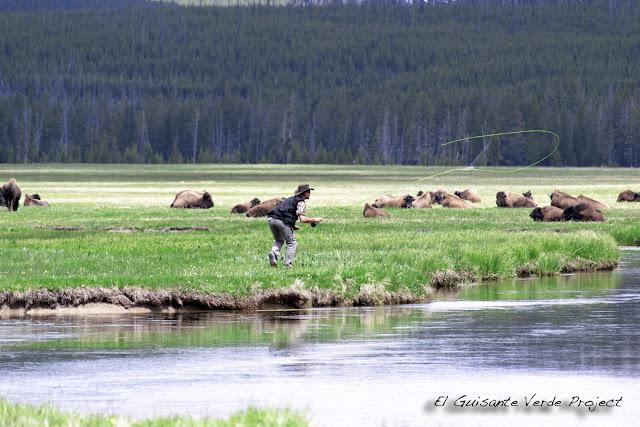 Pescando con mosca entre bisontes - Yellowstone, por El Guisante Verde Project