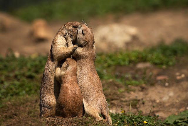 omorfos-kosmos.gr - Ζώα αποδεικνύουν ότι τα φιλιά δεν είναι μόνο για τους ανθρώπους
