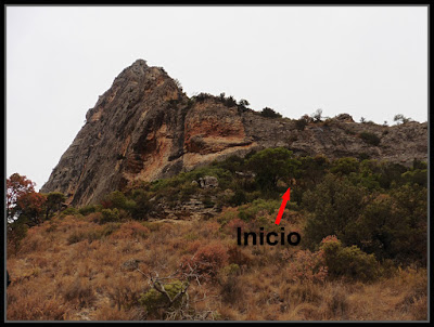 Roca Regina, Ribes Vidal