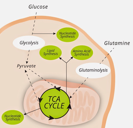Glucose or Glutamine?
