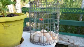 Πως αποθηκεύουμε τα αυγά μας και πόσες μέρες διατηρούνται εντός η εκτός ψυγείου