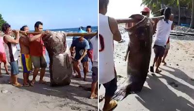 Nelayan memancing ikan kerapu besar