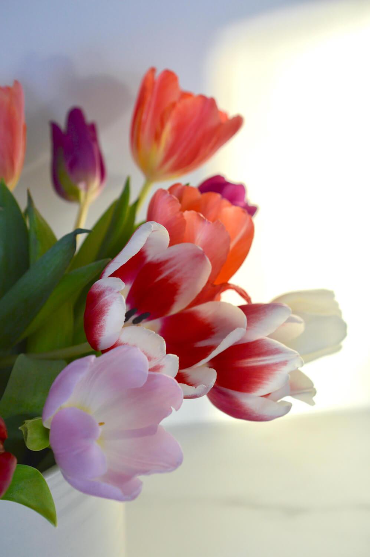 värikkäät-tulppaanit-talviaurinko