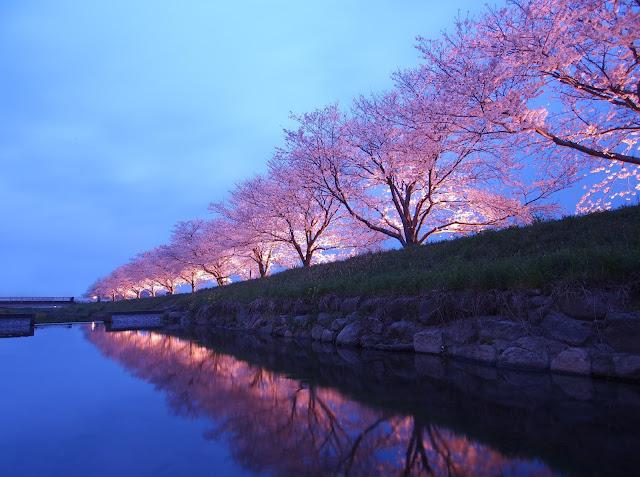 Fukuoka Japan Cherry Blossom Festival