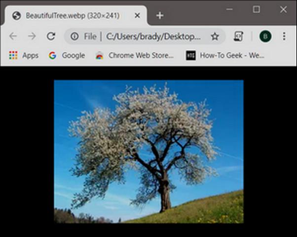 تعرف علي امتداد الصور WebP وكيفية فتح وانشاء الملفات بهذه الصيغة