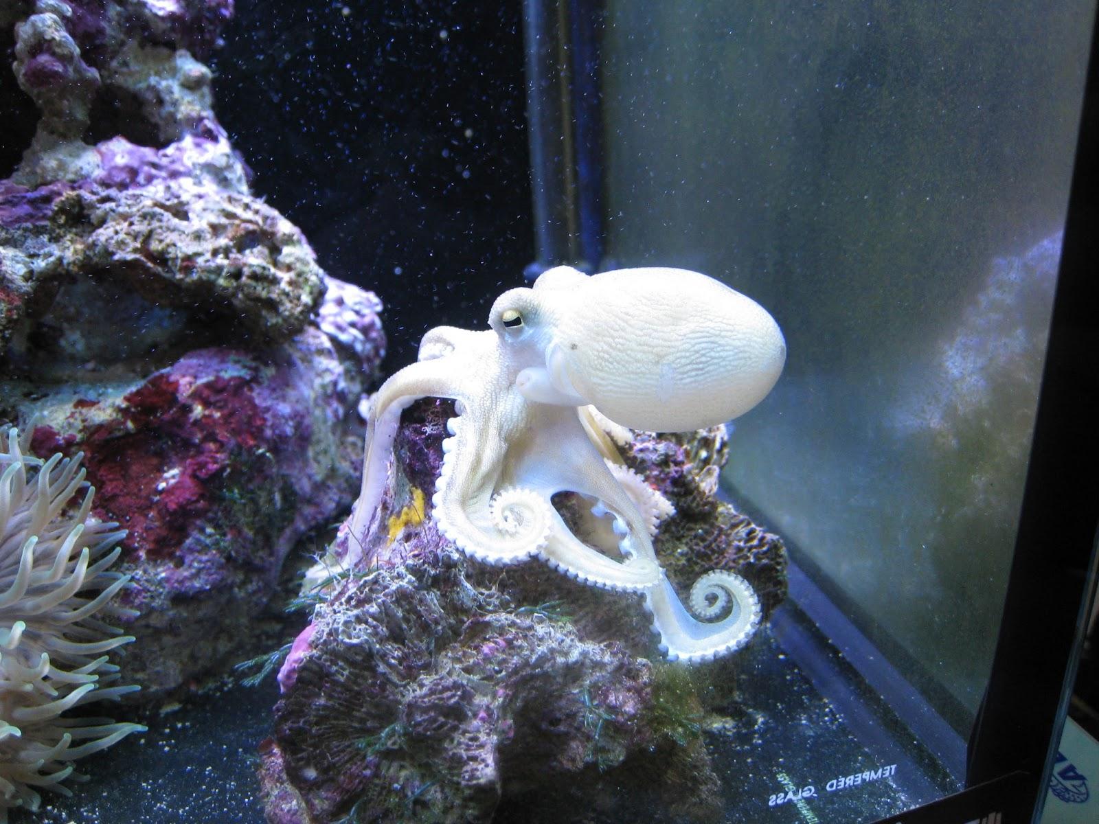 Paul's Trips 保羅嬉遊: 1尺半海水缸 45 x 45 x 45 (cm x cm x cm) Marine Aquarium