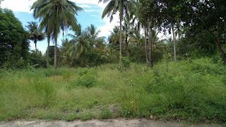 Farm For Sale Located at Mkuranga Town along Kilwa Road, it Consist of 6 acres Tsh.2 Billions