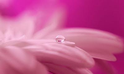 water drop on flower pics