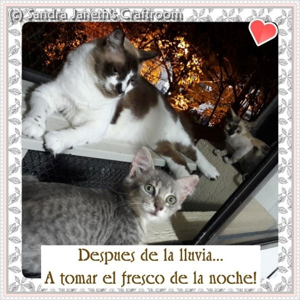 Gatos, Coco, Riana, Gina