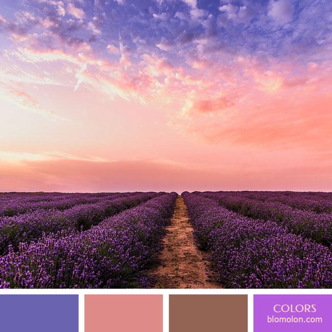 variedad_en_color_color_60