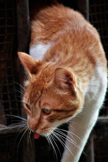 There Are No Bad Cats! (Conduct Problems and How to Solve Them)