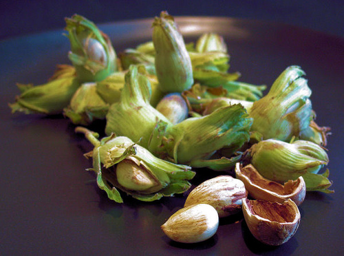 Temperate Climate Permaculture: What's in a name? Hazelnut ...