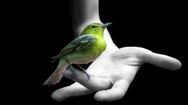 Wallpapers Birds, خلفيات طيور, صور خلفيات طيور جميلة,