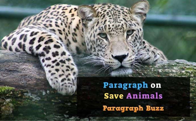Paragraph on Save Animals