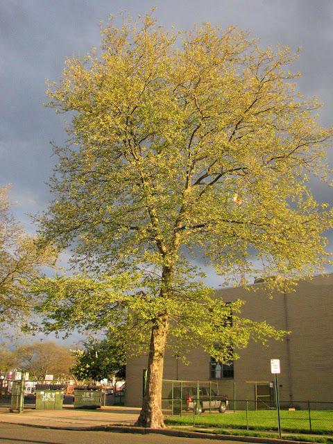 Farmingdale-Spring-Sky