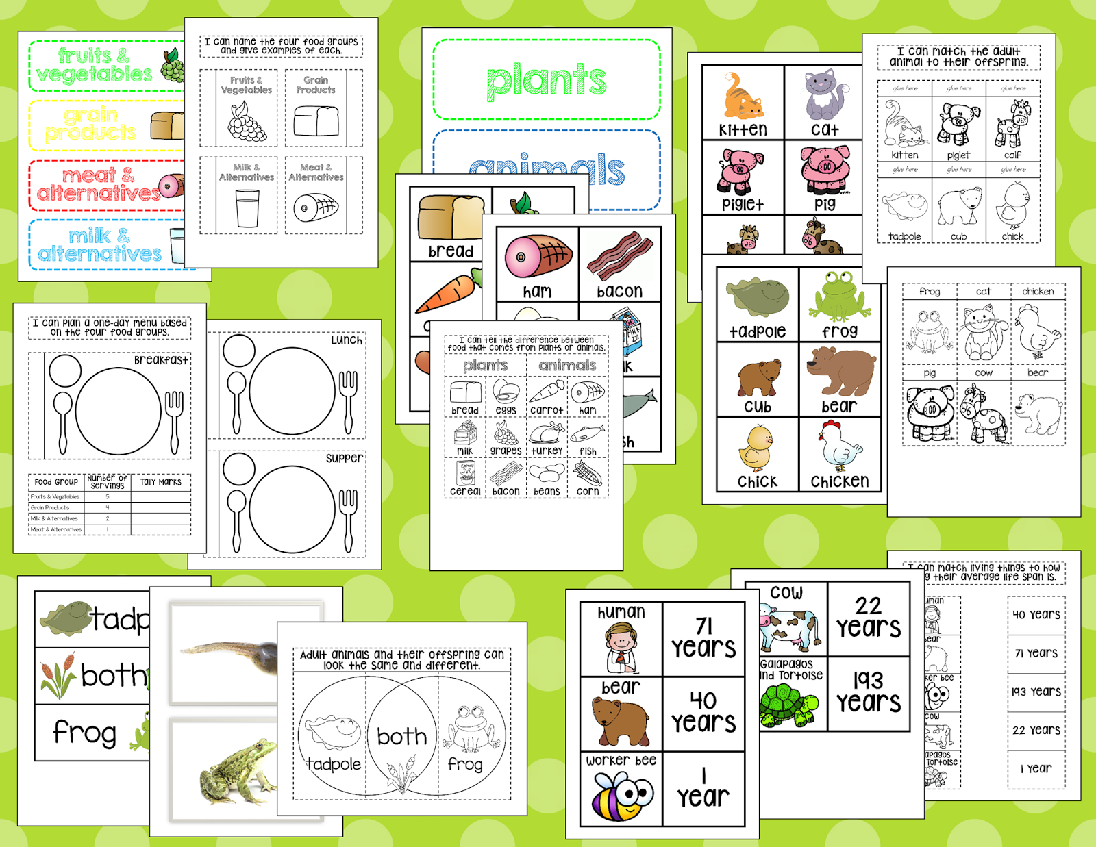 Garden Worksheet Kingden