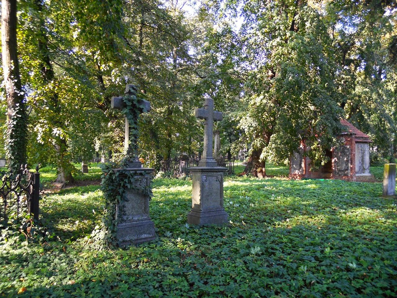 Krzyże na cmentarzu ewangelickim porosły bluszczem.