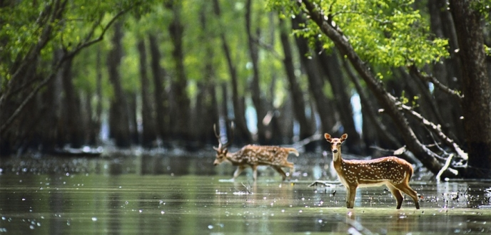 Sundarban Tours And Travels