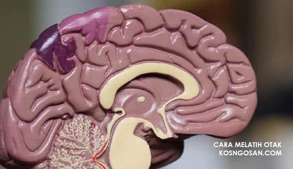 cara melatih otak