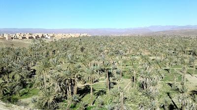 Palmerales; Oasis; Agdz; أگدز; ⴰⴳⴷⴻⵣ; Valle; Valley; Vallée; Draa; Marruecos; Morocco; Maroc; المغرب