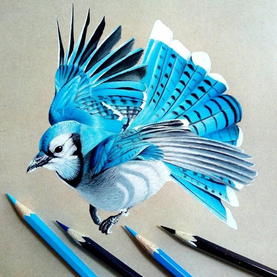 02-Bele-Birds-Drawings-www-designstack-co