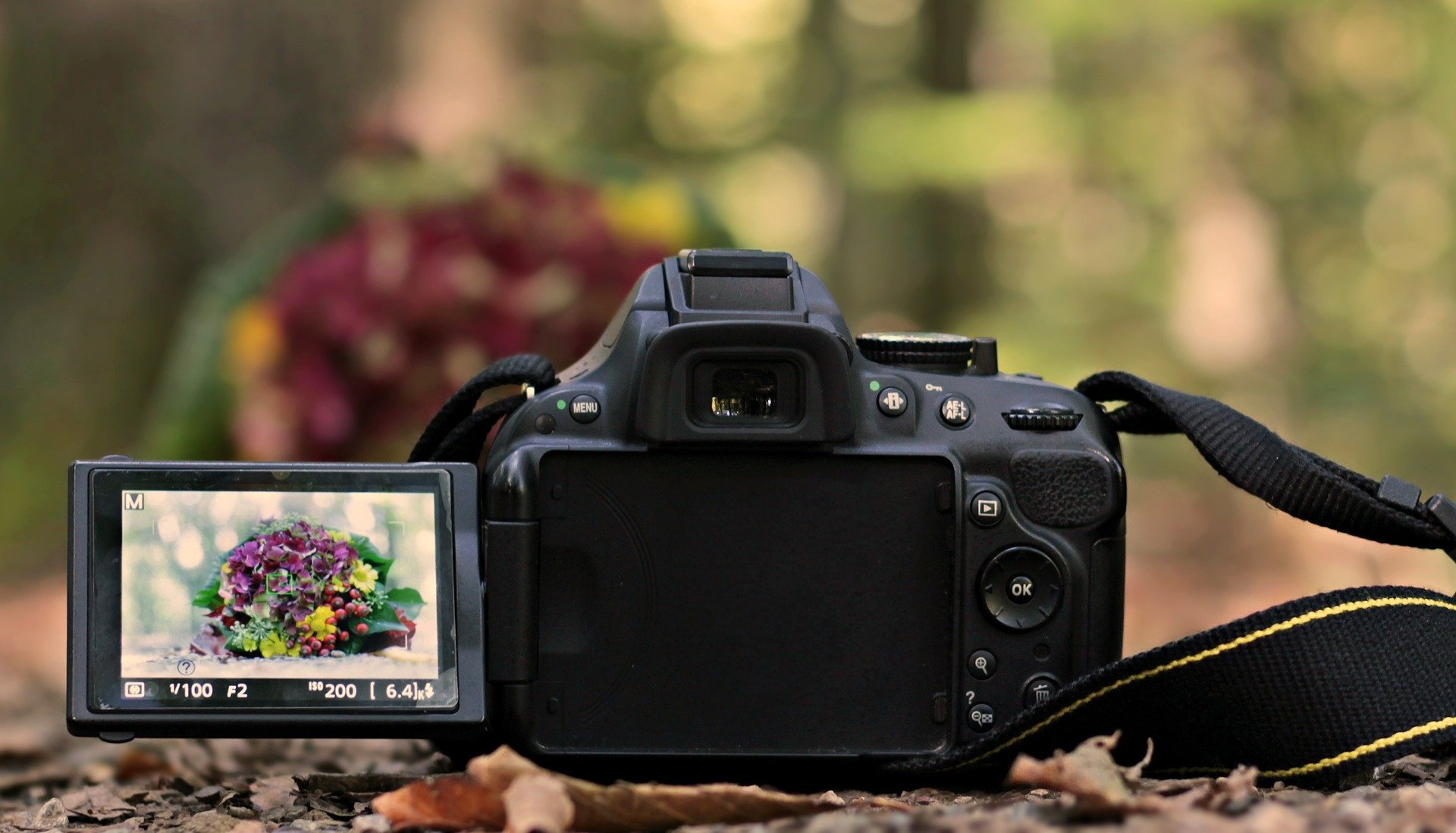 Best dslr camera for 2021