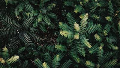 Wallpaper shrubs, branches, leaves, green