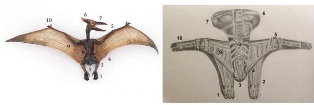 Confronto tra lo pterodattilo stilizzato di una ciotola Tami e un modello anatomico. Resa artistica del motivo Siassi Bowl di Oceanic Arts Australia. ( Oceanic Arts Australia )