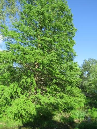 Matthaei Botanical Garden constructed wetland