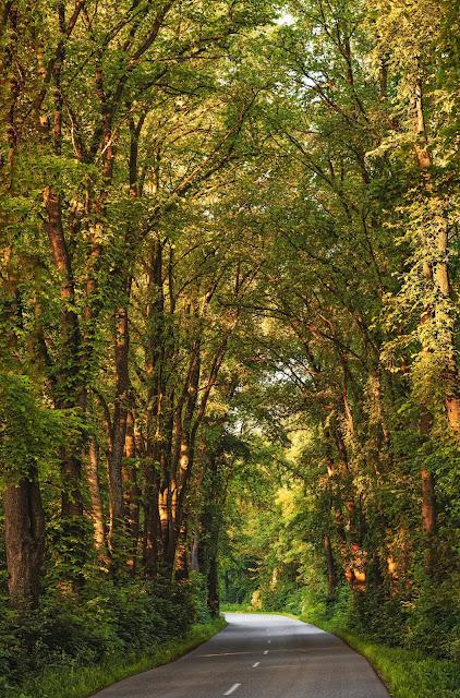 إعلان عن فتح مسابقة للتوظيف في محافظة الغابات في عدة ولايات في القطر الجزائري