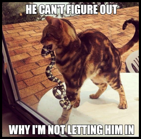 He can't figure out why I'm not letting him in. #animals #cat #snake #funny #nope #relatable