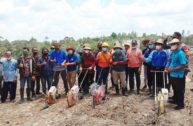Bupati Bartim Ampera AY Mebas Tanam Perdana Benih Jagung bersama Kelompok Tani Jandrah di Desa Kupang Baru