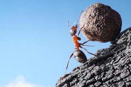 Cara Mengkombinasikan Kerja Keras Kerja Cerdas