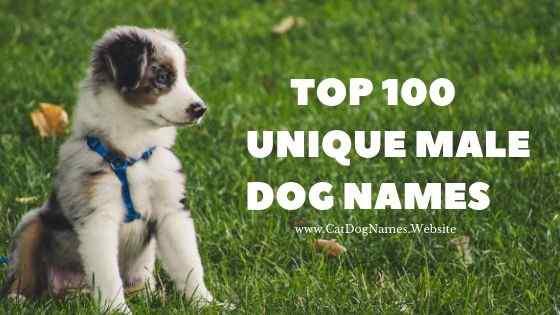 Top 100 Unique Male Dog Names, Dog Names