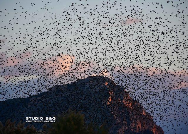 Χιλιάδες ψαρόνια στο Ναύπλιο - Οι εναέριοι σχηματισμοί τους προκαλούν δέος (βίντεο)