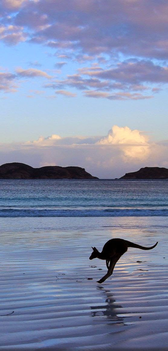Lucky Bay, Esperance, Western Australia- -10 Beautiful Cities in Australia
