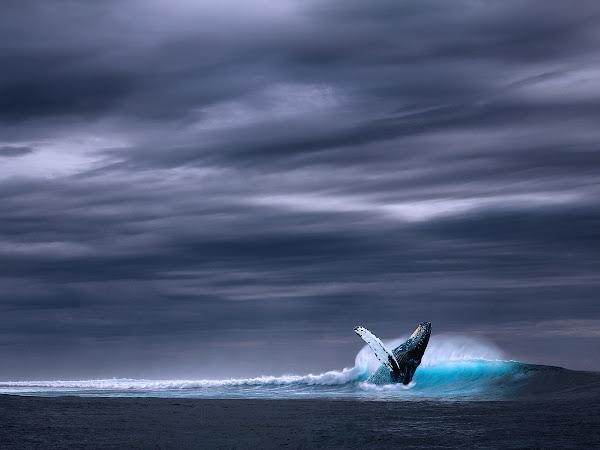 Ripple'ın üzerinde balinaların etkisi nasıl