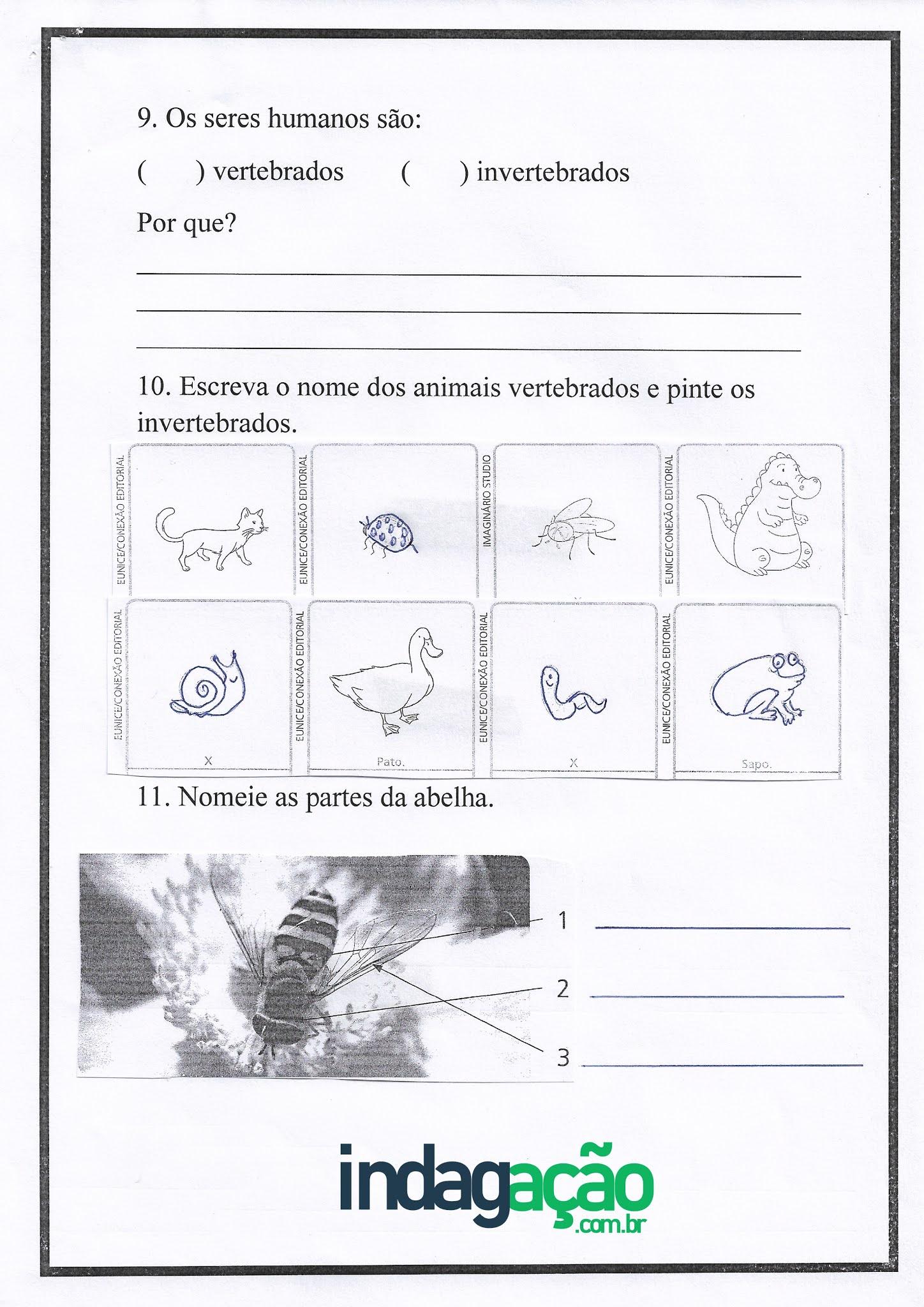 Atividade de Ciências: Animais vertebrados e invertebrados - Ensino Fundamental