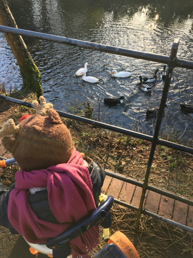 Our-weekly-journal--9th-Jan-2017-roath-park-watching-ducks