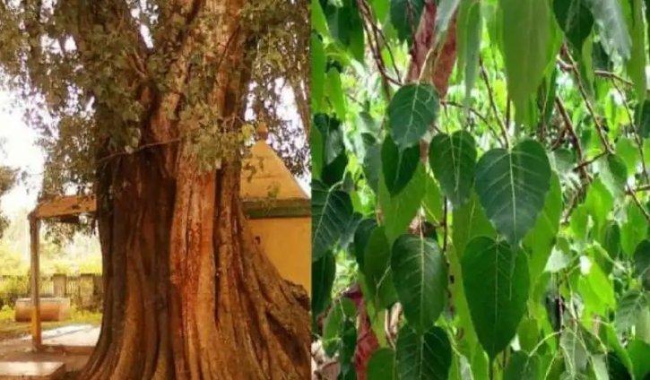 Somvati Purnima 2021: आज है सोमवती पूर्णिमा, जिंदगी को खुशियों से भरने के लिए कर लें ये उपाय