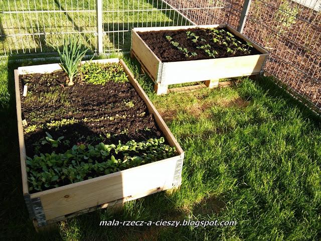 Mój miejski ogródek 2016 - DIY warzywne rabatki z palety