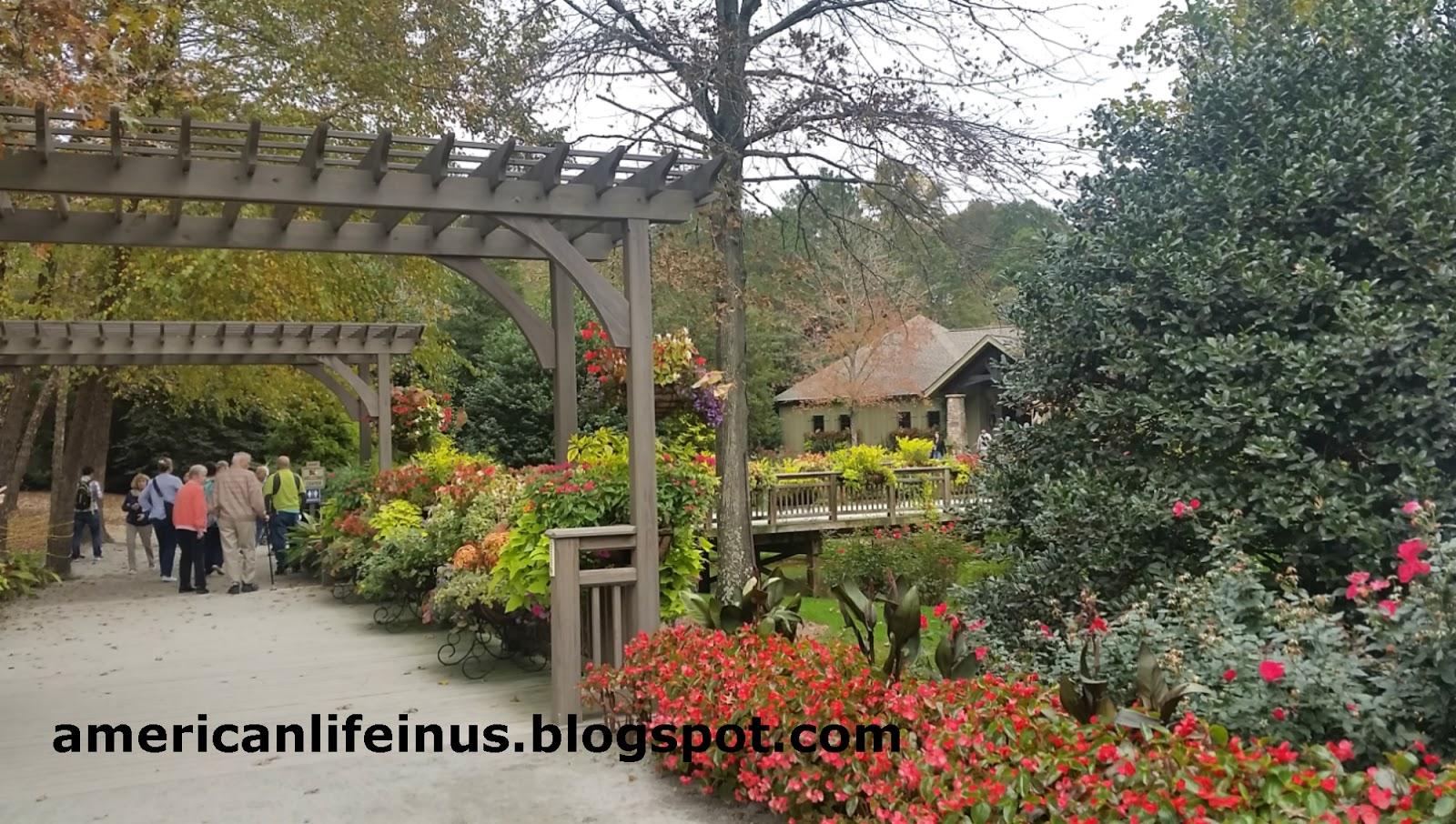 Обои цветы, сша, кусты, ball ground gibbs gardens. Природа foto 19