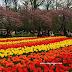 Keindahan Bunga Tulip Di Keukenhof, Holland