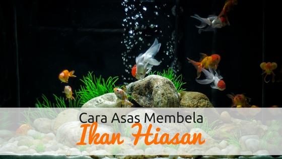 Cara Asas Membela Ikan Hiasan Di Rumah