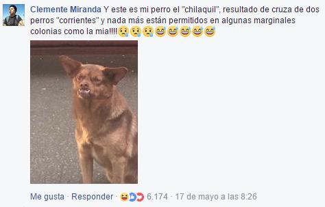Encontraron al Chilaquil; es de Chile y busca un hogar