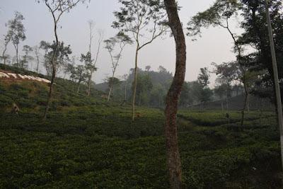 Mathiura tea garden travel